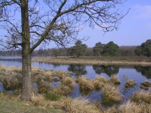 Drents-Friese Wold